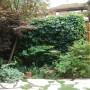 208 Holmwood Rear Garden